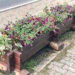 Acţiune de plantare de flori în jardinierele stradale